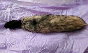 Pink and black foxtail on purple tissue paper